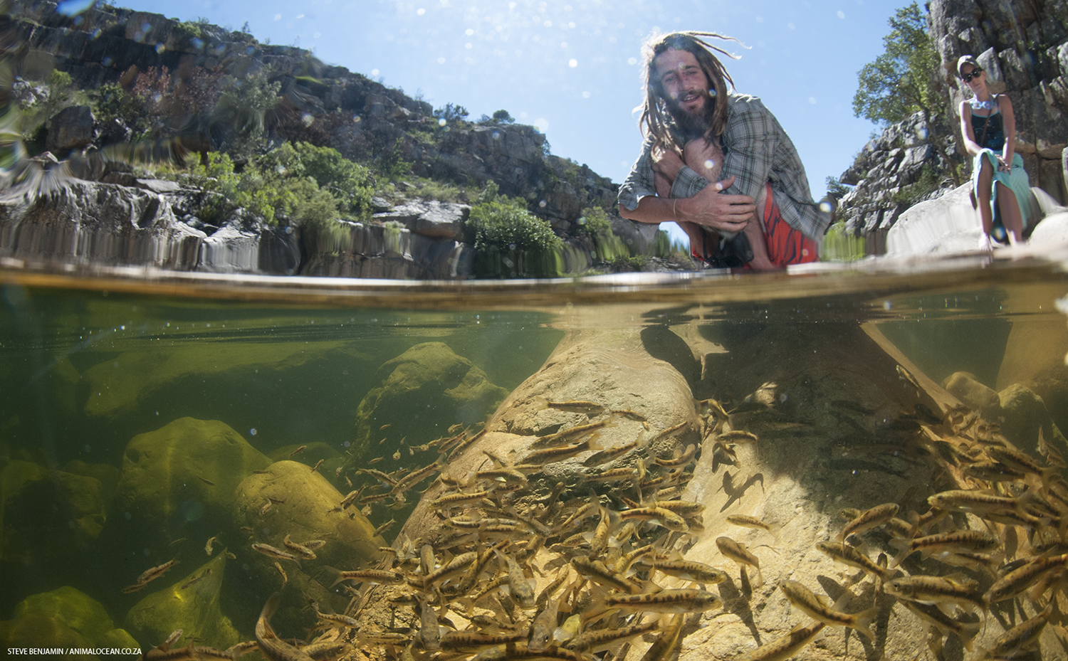 1 August 2018: How vulnerable are fynbos fish to climate change